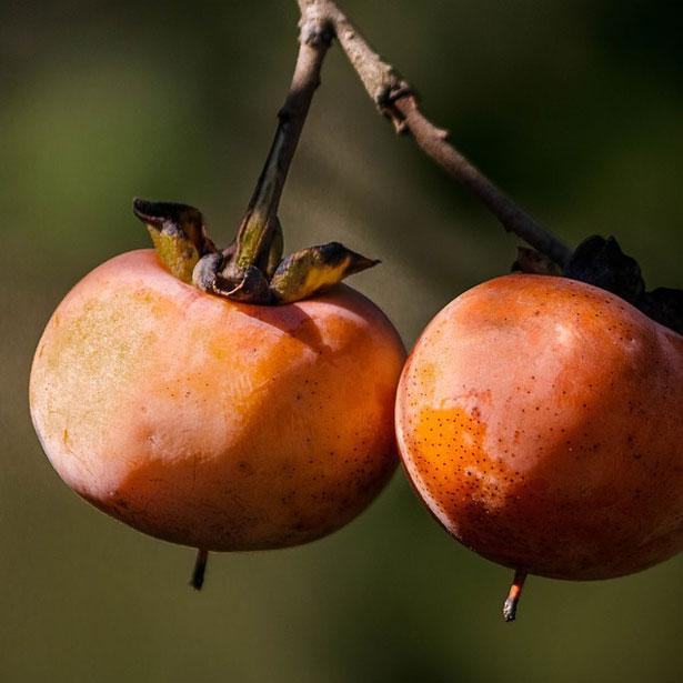 """frutti del Diospyros kaki """"cioccolatino"""""""