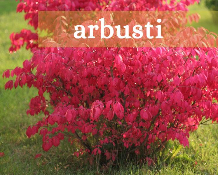 arbusti di piante da pastura